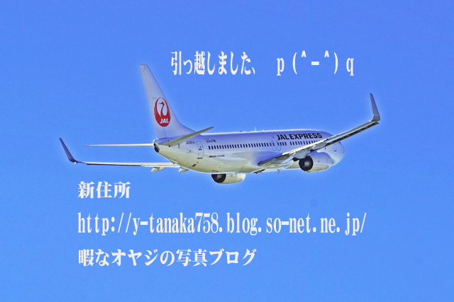 DSC03783-引っ越し.jpg